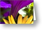 Symphony Greeting Cards - Close View Of Purple Petunia And Yellow Greeting Card by Todd Gipstein