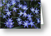 Spring Scenes Greeting Cards - Close View Of Spring Flowers Greeting Card by Darlyne A. Murawski