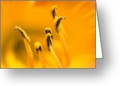 Close Views Greeting Cards - Close View Of The Stamen Of A Yellow Greeting Card by Todd Gipstein