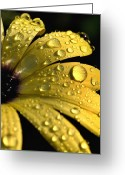 Symphony Greeting Cards - Close View Of Water Drops On An Greeting Card by Todd Gipstein