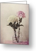 Chrysanthemum Greeting Cards - Closely Greeting Card by Priska Wettstein