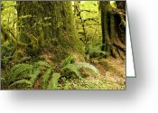 Olympic National Park Greeting Cards - Closeup Of A Tree Trunk And Ferns Greeting Card by Tim Laman