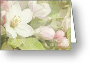 Soft Grunge Greeting Cards - Closeup of apple blossoms in early Greeting Card by Sandra Cunningham