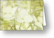 Dew Drops Greeting Cards - Closeup of hydrangea flowers with vintage background Greeting Card by Sandra Cunningham
