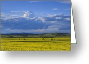 Alberta Foothills Landscape Greeting Cards - Clouds and Canola Greeting Card by Robert Karg