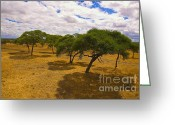 On-the-look-out Greeting Cards - Cloudy day on the Serengeti Greeting Card by Darcy Michaelchuk