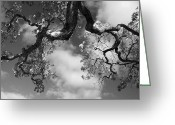 Abstract Sky Greeting Cards - Cloudy Oak Greeting Card by Laurie Search