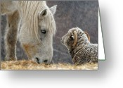 Horse Greeting Cards - Clouseau and Friend Greeting Card by Don Schroder