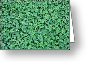 Directly Above Greeting Cards - Clover Field Greeting Card by Daniela Duncan