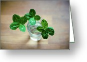 Luck Greeting Cards - Clovers Leaves In Glass Greeting Card by Øystein Tveiten