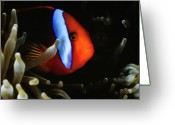 Clown Fish Greeting Cards - Clown Fish - Australia At Night Greeting Card by Mark Christian