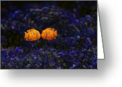 Clown Fish Greeting Cards - Clown fish abstract Greeting Card by Sheila Smart