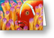 Silk Art Greeting Cards - Clown Fish  Greeting Card by Daniel Jean-Baptiste