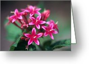 Wildflower Photography Greeting Cards - Cluster Of Pink Flowers Greeting Card by Stockbyte