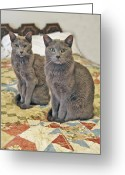 Cat Profile Greeting Cards - Clyde and Bonnie Greeting Card by James Steele