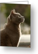 Cat Profile Greeting Cards - Clydes Profile Greeting Card by James Steele