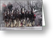 Carriage Team Greeting Cards - Clydesdale Hitch Greeting Card by Nancy Bairnsfather