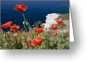 Greece Greeting Cards - Coastal Poppies Greeting Card by Richard Garvey-Williams