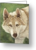 Wolves Pastel Greeting Cards - Cochise Greeting Card by Teresa LeClerc