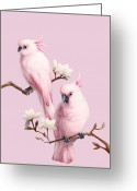 Pink Flower Branch Greeting Cards - Cockatoos And Magnolia Greeting Card by BJI/Blue Jean Images