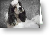 Cocker Spaniel Greeting Cards - Cocker Spaniel Greeting Card by Rebecca Cozart