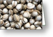 Shellfish Greeting Cards - Cockle shell background Greeting Card by Jane Rix