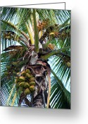 Hawai Greeting Cards - Coconut Palm Inflorescence Greeting Card by Karon Melillo DeVega