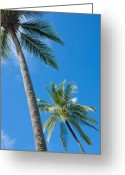 Sea View Greeting Cards - Coconuts  Greeting Card by Atiketta Sangasaeng