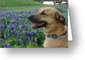 Texas.photo Photo Greeting Cards - Cody in Bluebonnets Greeting Card by Robyn Stacey