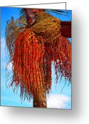 Guatape Greeting Cards - Coiffure Greeting Card by Skip Hunt
