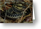 Wildlife Photos Greeting Cards - Coiled Garter Snake  Greeting Card by Neal  Eslinger