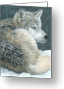 Wolves Drawings Greeting Cards - Cold Evening Greeting Card by Carla Kurt