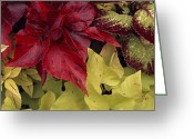 Image Type Photo Greeting Cards - Coleus And Other Plants In A Window Box Greeting Card by Paul Damien
