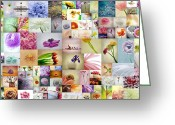 Daisies Photos Greeting Cards - Collage 4 Greeting Card by Kristin Kreet