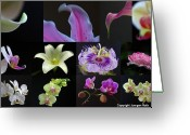 Flower Over Black Photo Greeting Cards - Collection of Flowers over Black  Greeting Card by Juergen Roth