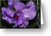 Exotic Flora Greeting Cards - Collection of Water Drops Greeting Card by Svetlana Sewell