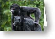 Two-faced Greeting Cards - Colombian Black-faced Spider Monkeys Greeting Card by Power And Syred