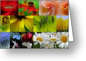 Tulip Greeting Cards - Color Emotion Greeting Card by Juergen Roth
