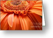 Daisies Photos Greeting Cards - Color Greeting Card by Kristin Kreet