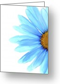 Daisy Greeting Cards - Color Me Blue Greeting Card by Rebecca Cozart
