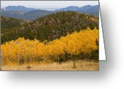Autumn Photographs Greeting Cards - Colorado Aspen View Looking Out Greeting Card by James Bo Insogna