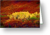 Red Leaves Greeting Cards - Colorado Aspens Super Sat Greeting Card by Rich Franco