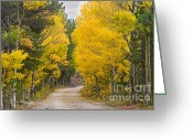 Colorado Greeting Cards Greeting Cards - Colorado Autumn Aspen Road Boulder County Greeting Card by James Bo Insogna