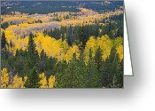Colorado Greeting Cards Greeting Cards - Colorado Autumn Aspens Boulder County  Greeting Card by James Bo Insogna