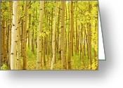 Leaves Photographs Greeting Cards - Colorado Fall Foliage Aspen Landscape Greeting Card by James Bo Insogna