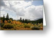 Wall Calendars Greeting Cards - Colorado Mountain Gold Greeting Card by Brent Parks