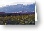 Great Point Greeting Cards - Colorado Style Landscape Sunflowers on the Sangre de Cristos Greeting Card by Scott Hansen