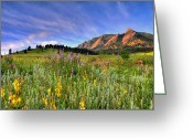Rocks Greeting Cards - Colorado Wildflowers Greeting Card by Scott Mahon