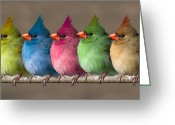 Grand Memories Greeting Cards - Colored Chicks Greeting Card by John Haldane