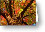 Landscape Posters Greeting Cards - Colorful Autumn Abstract Greeting Card by James Bo Insogna